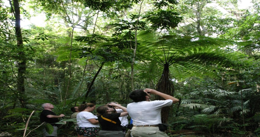 Afternoon and Night Rainforest Wildlife Spotting Tour
