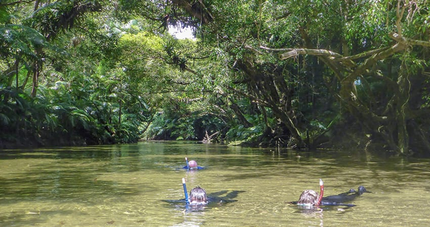 River Drift Snorkelling - Port Douglas