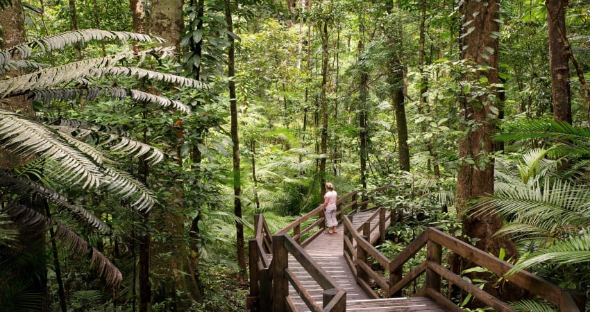 Daintree Adventure Day with Jungle Surfing - Departs Port Douglas