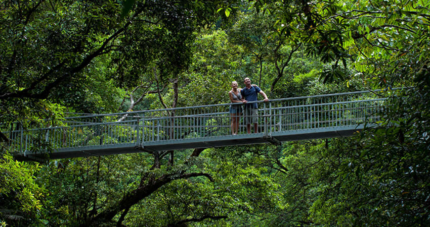 Mossman Gorge Rainforest Walk, 3.5 Hours - Port Douglas