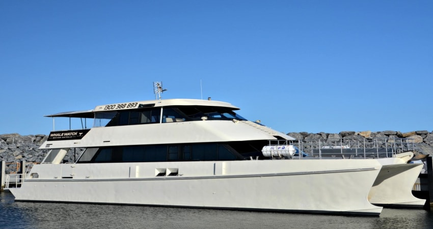 Whale Watching Cruise - Fremantle