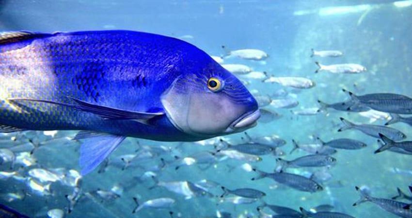 In-Sea Aquarium Swim with Transfers - Victor Harbor SA