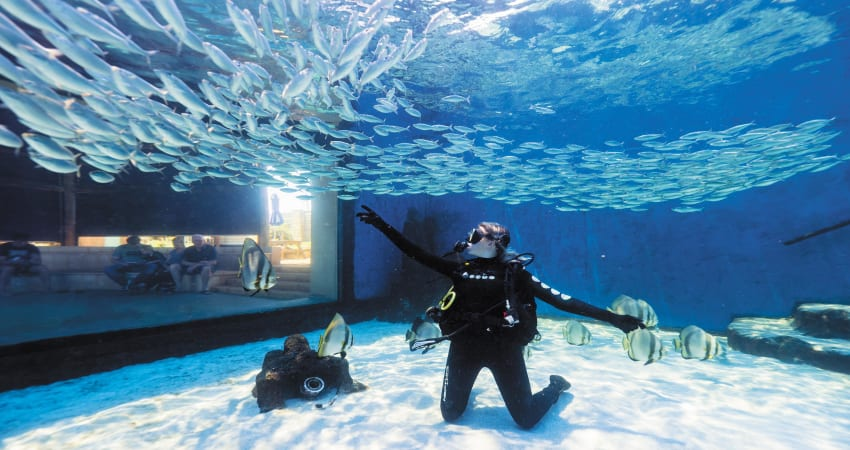 Certified Dive with Sharks at The Aquarium of Western Australia - Perth