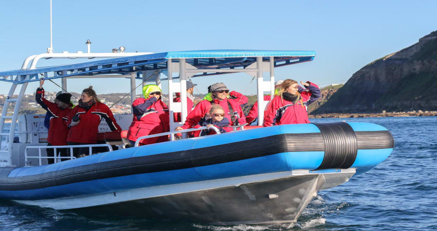 Humpback Whale Encounter Tour - Newcastle
