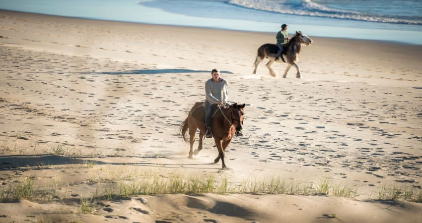Horse Trail Ride, 90 Minutes Forest to Beach - Byron Bay