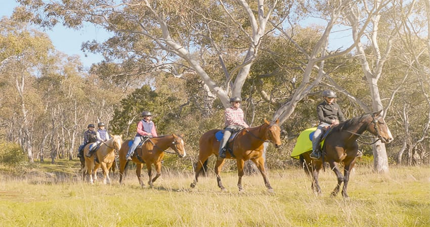 Beginner to Intermediate Horse Riding Tour, 2 Hours - Melbourne