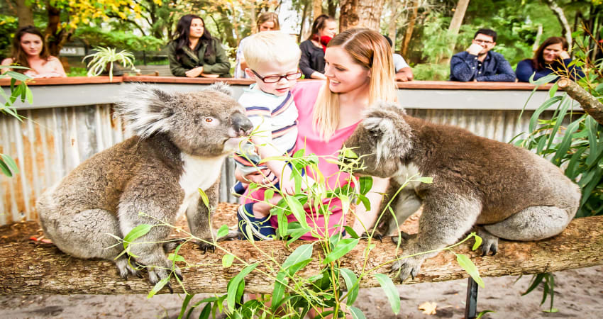 Outback Splash Entry and Koala Encounter - Perth
