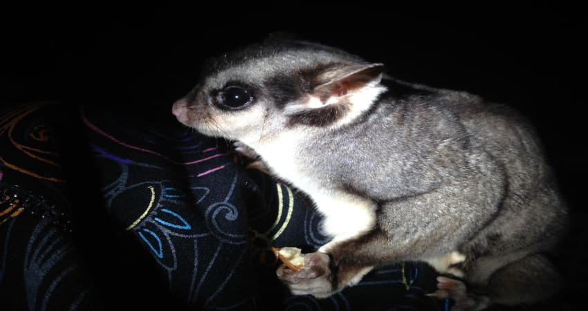 2-Hour Nocturnal Tour at Softfoot Marsupial Sanctuary - Hindmarsh Valley