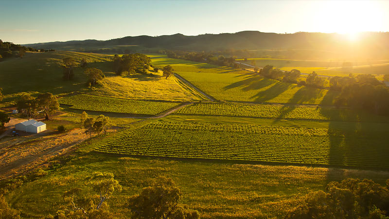 Helicopter Flight, 10-minute Private Tour of the Barossa - Barossa Valley