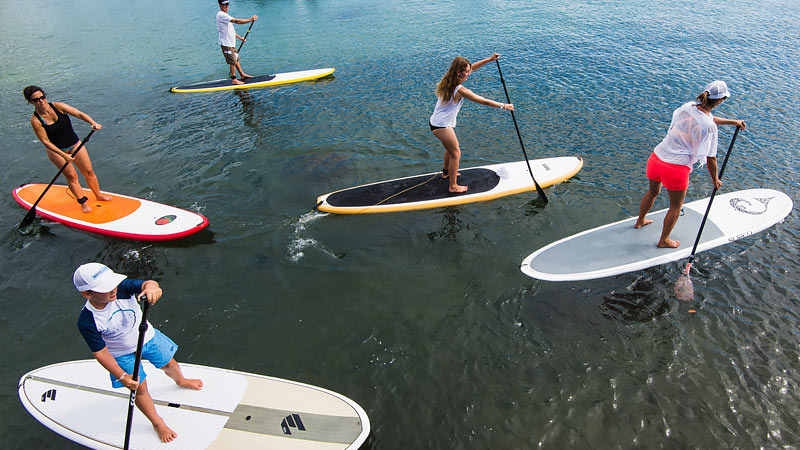 Stand Up Paddle Boarding on Sydney Harbour + Walking Tour and a 2 Course Doyles Seafood Lunch