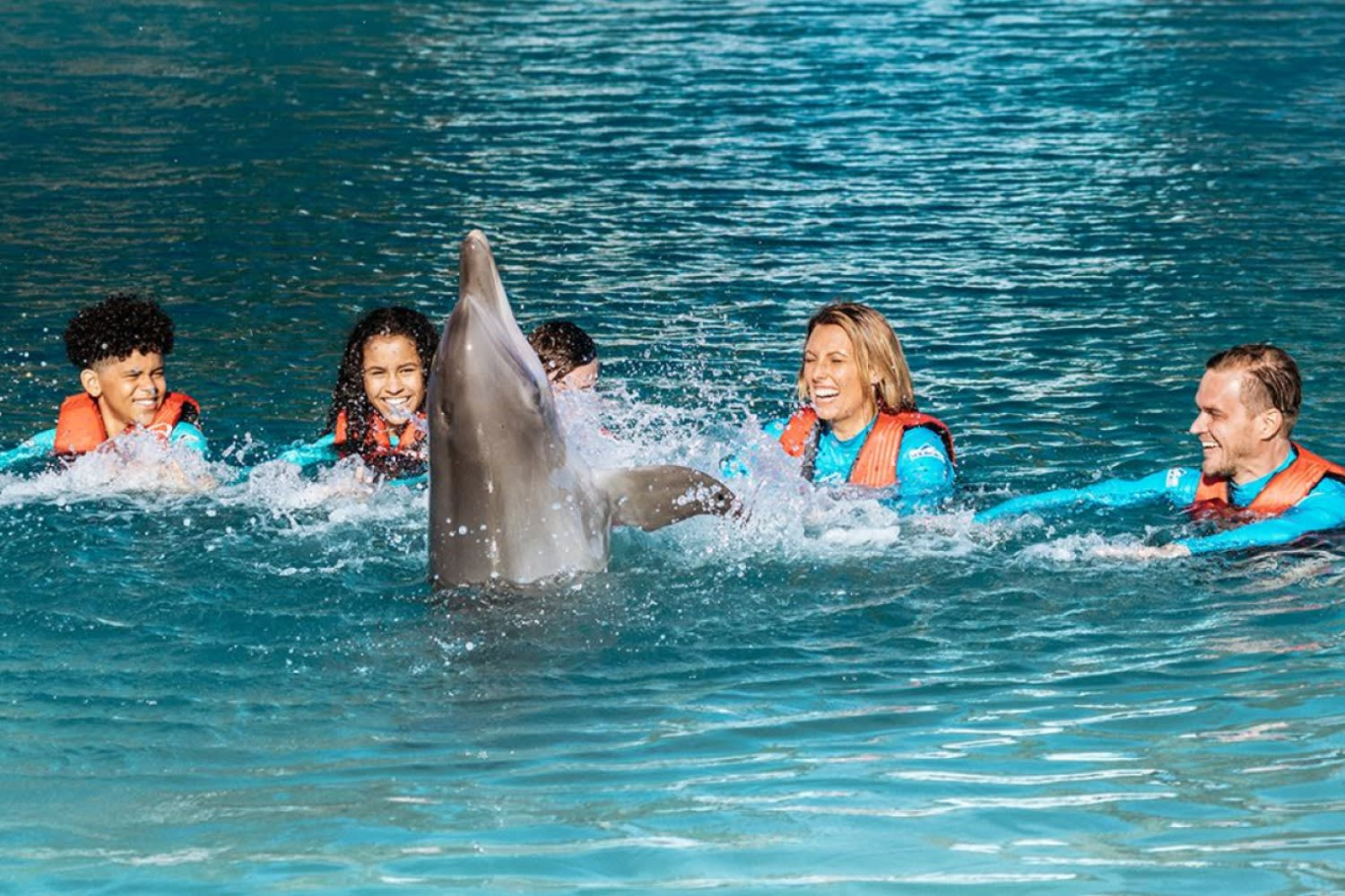 Dolphin Deep Water Adventure at Sea World with Day Entry