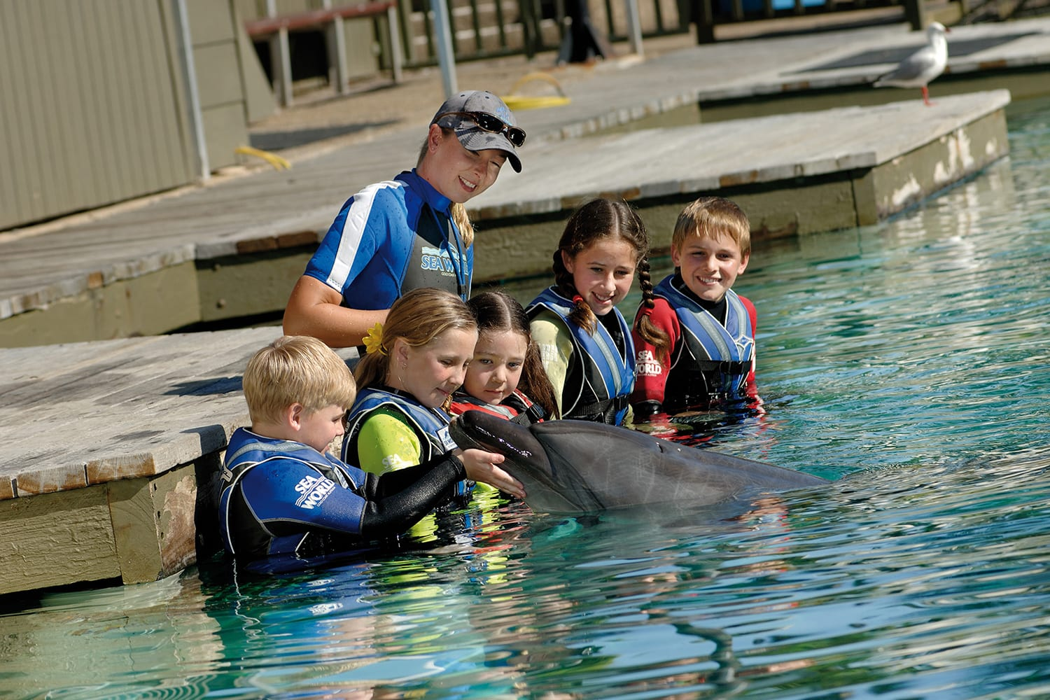 Dolphin Aqua Adventure at Sea World for Child