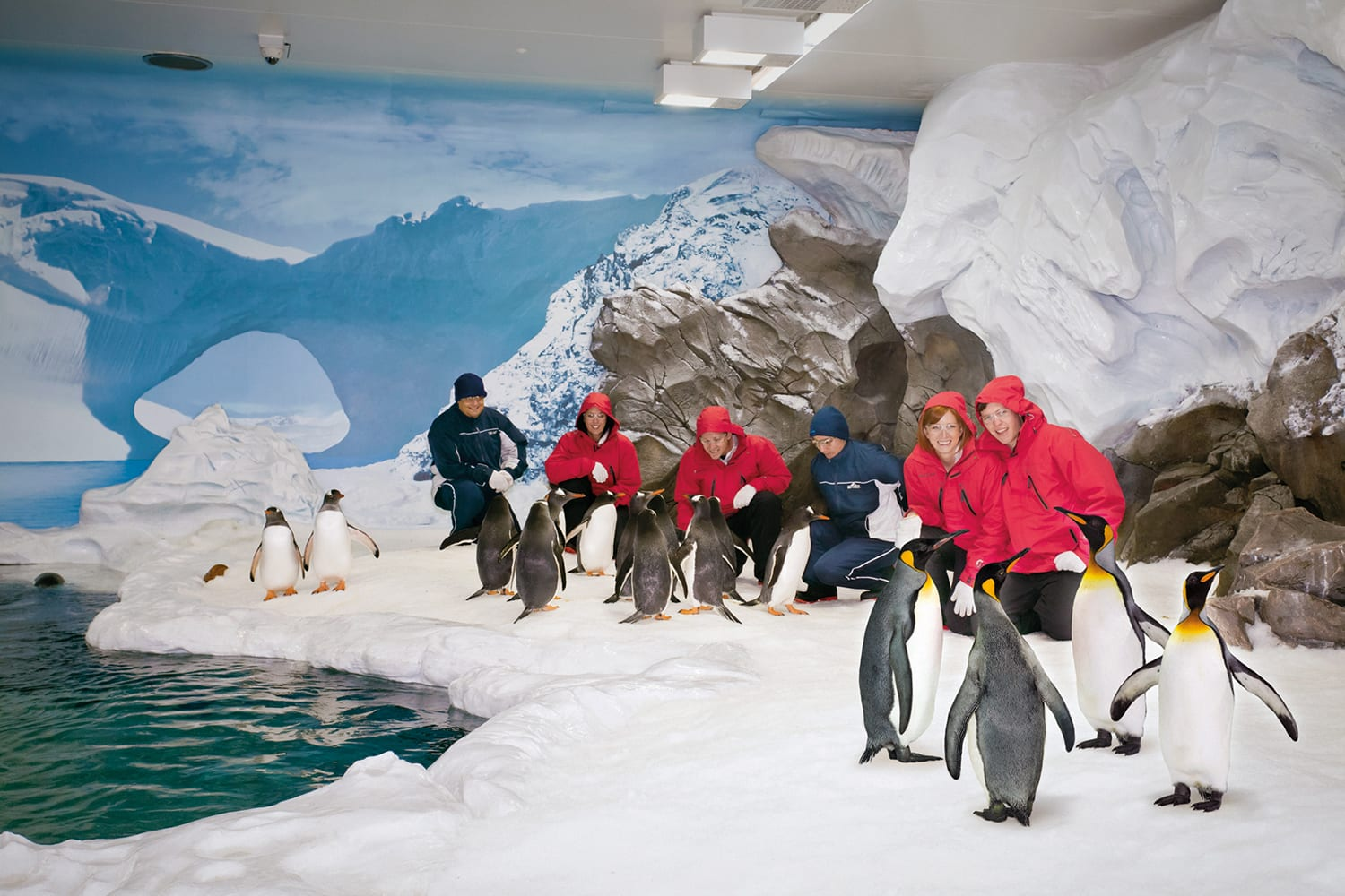 Penguins Antarctic Adventure Sea World
