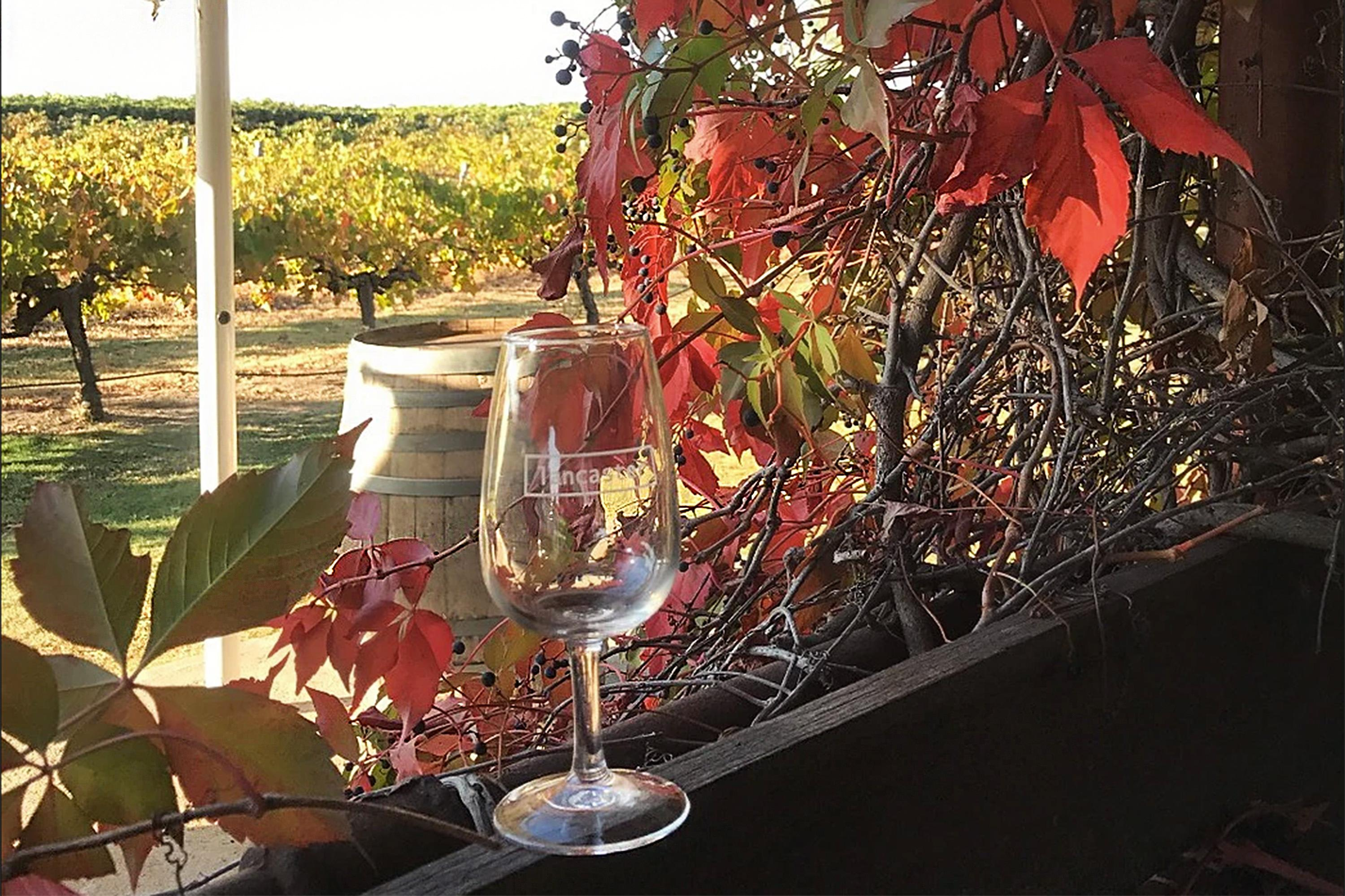 Morning Horse-Drawn Wagon Tour, Swan Valley - With Food and Wine Sampling