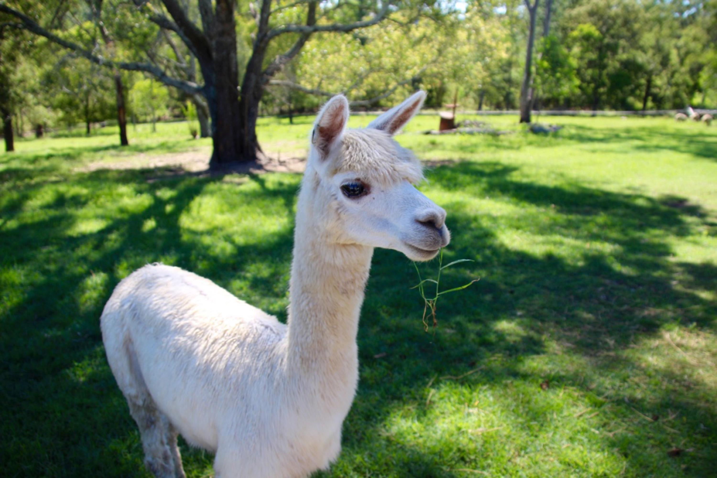 Half Day Animal Tour at Trevena Glen Farm, Brisbane
