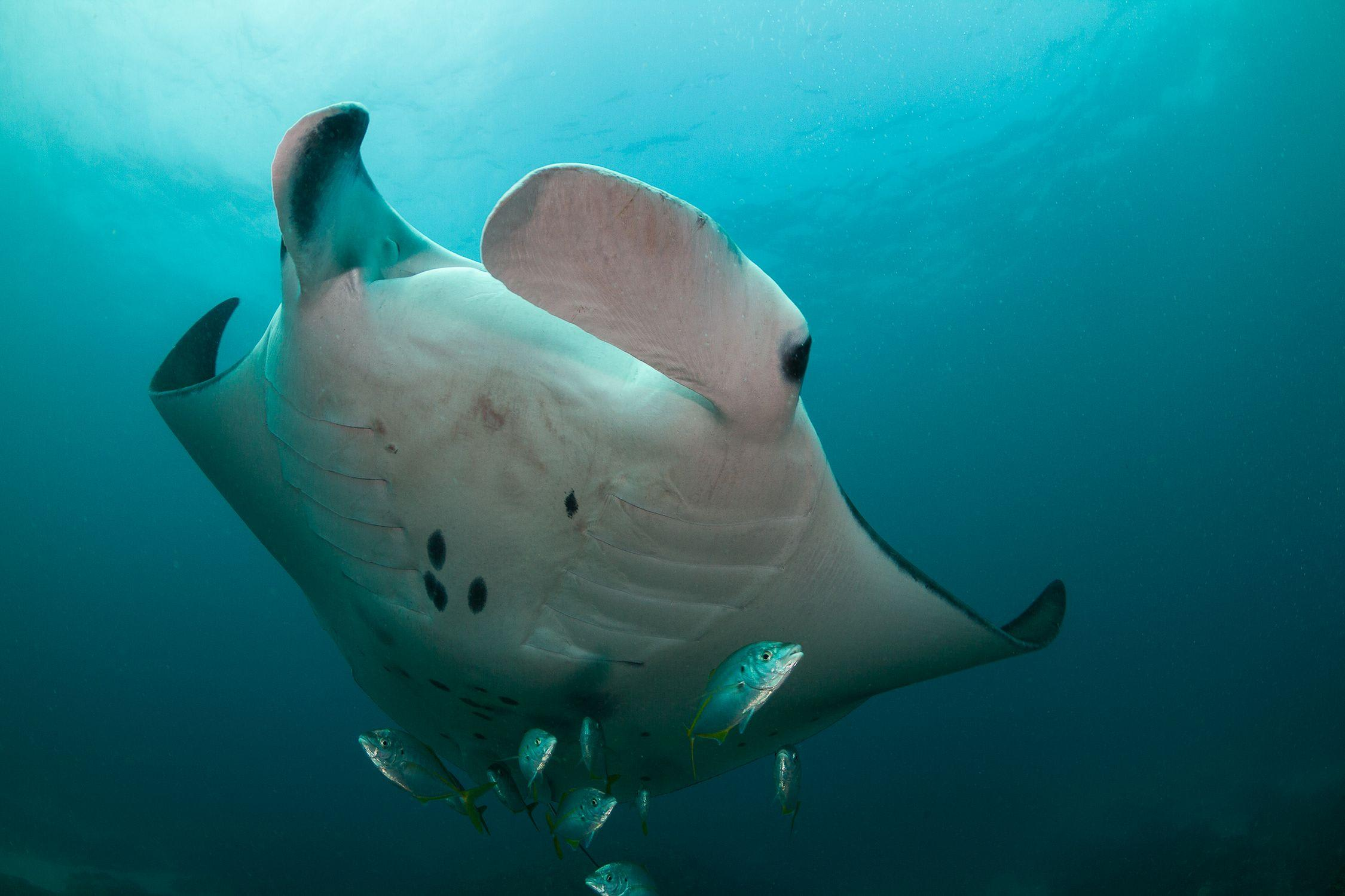 Scuba Dive at Julian Rocks, Byron Bay - Certified Divers Only