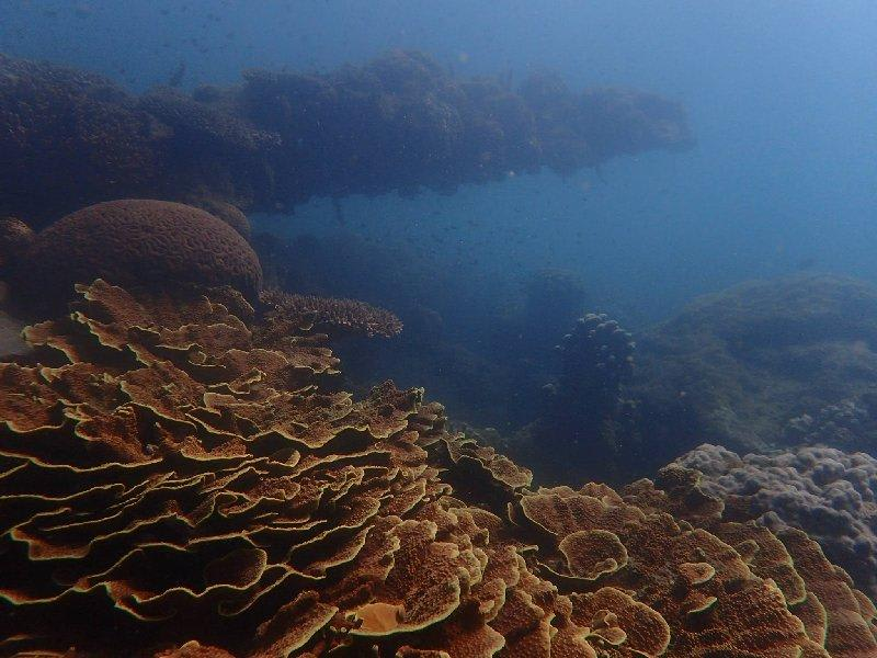 Magnetic Island Shipwreck Snorkel Tour - 90 Minutes