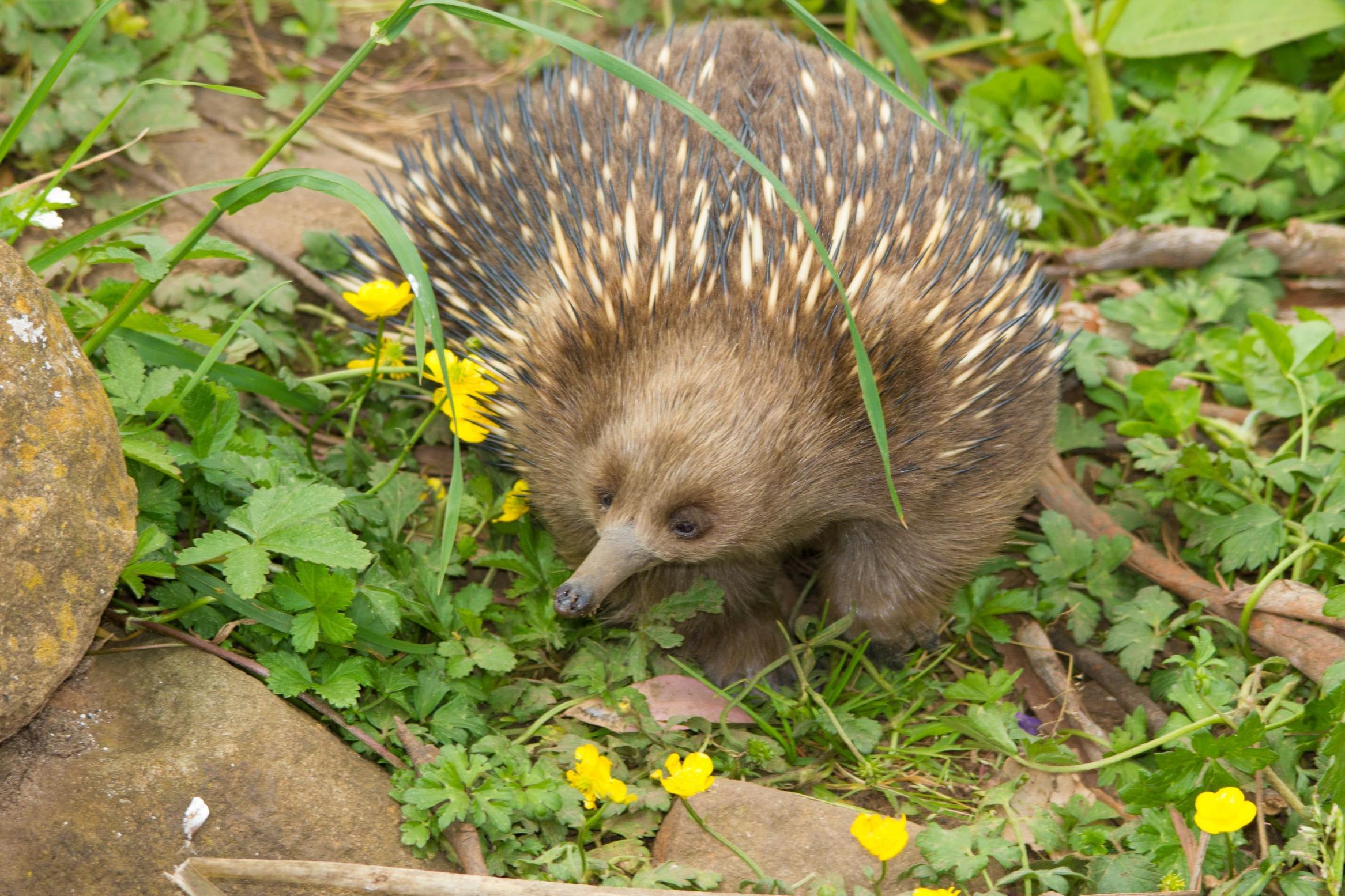 Wildlife Spotting Wilderness Getaway For 2, Tasmania - 3 Nights