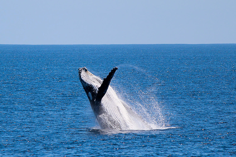 Whale Watching Cruise - Dunsborough, WA