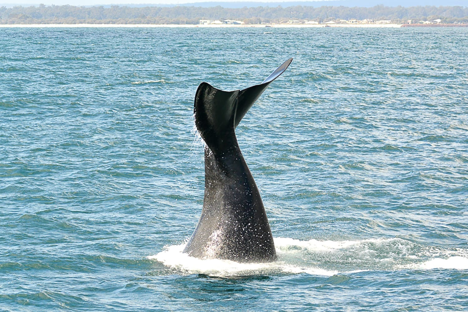 Whale Watching Cruise, For 2 - Dunsborough, WA