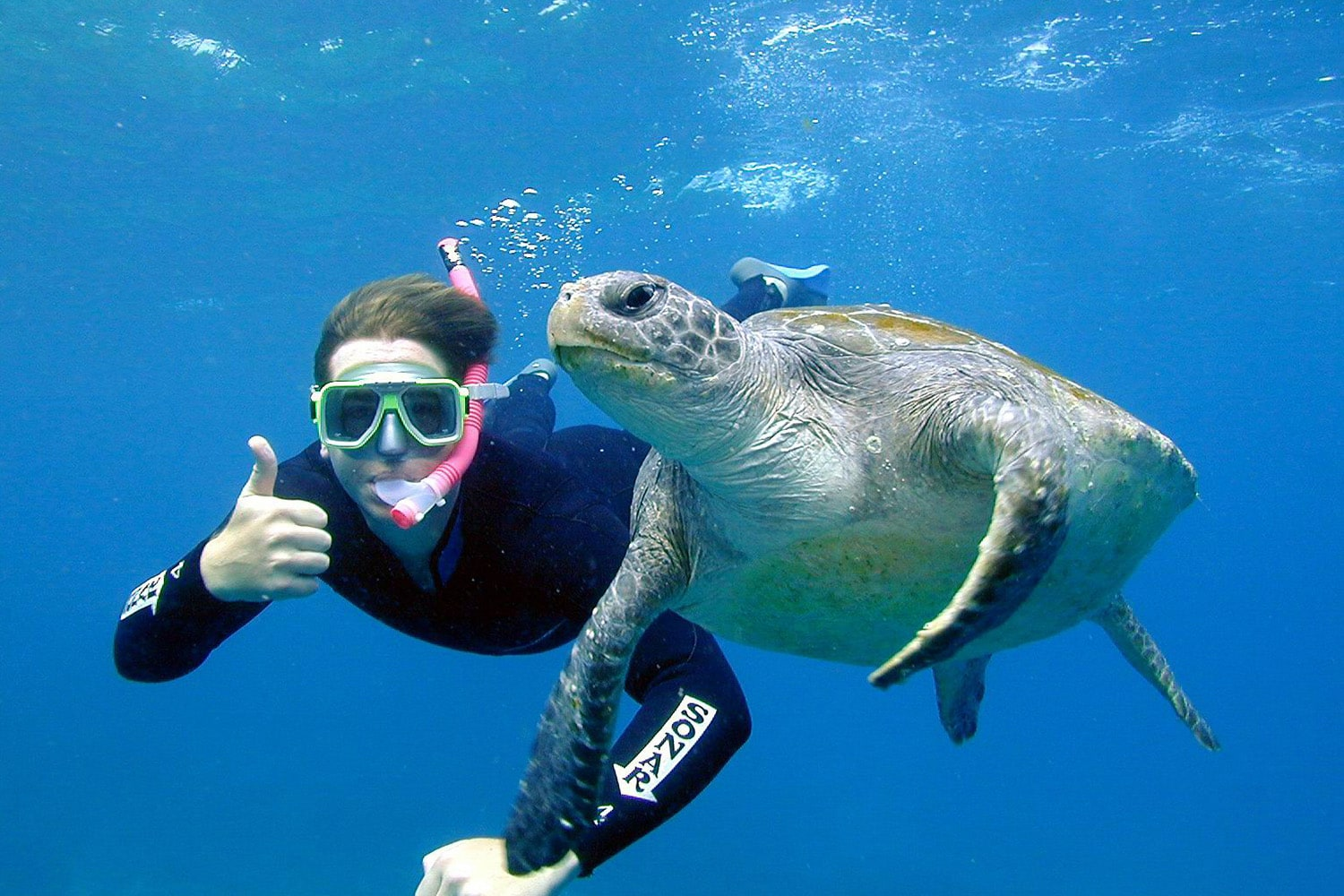 Sea Turtle Snorkel Tour, 2.5 Hours - Julian Rocks, Byron Bay