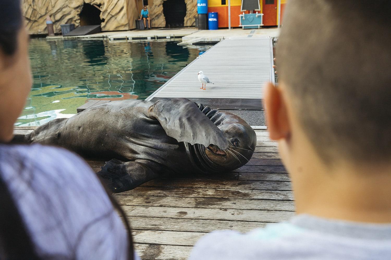 Seal Encounter - Surfers Paradise, Gold Coast
