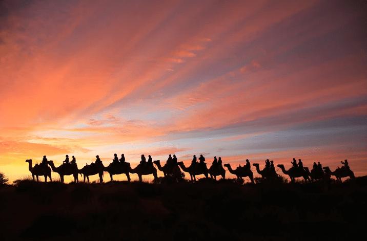 Sunrise Camel Ride, Yulara - 60 Minutes