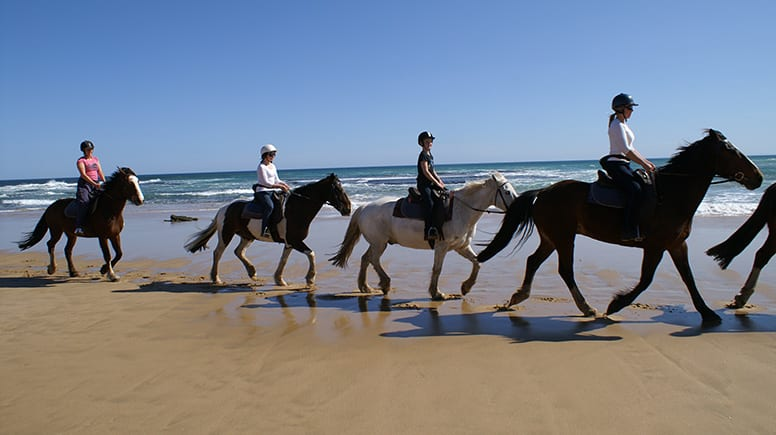Beach Horse Ride and Brewery Lunch For 2 - Mornington Peninsula