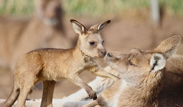 Bonorong Wildlife Sanctuary Private Night Tour - Hobart