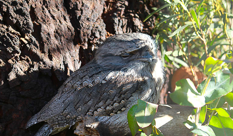 Bonorong Wildlife Sanctuary Feeding Tour - Hobart