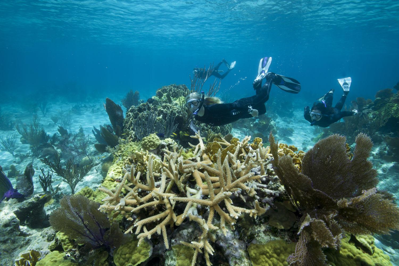 Snorkel Tour, Half Day – Sydney