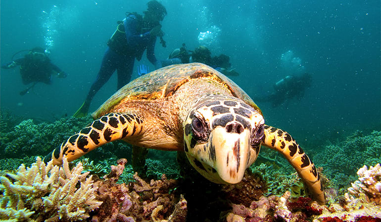 Scuba Diving Tour for Certified Divers, Full Day - Great Barrier Reef