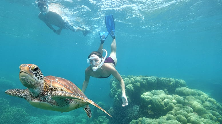 Great Barrier Reef Cruise with Scuba Diving - Cairns