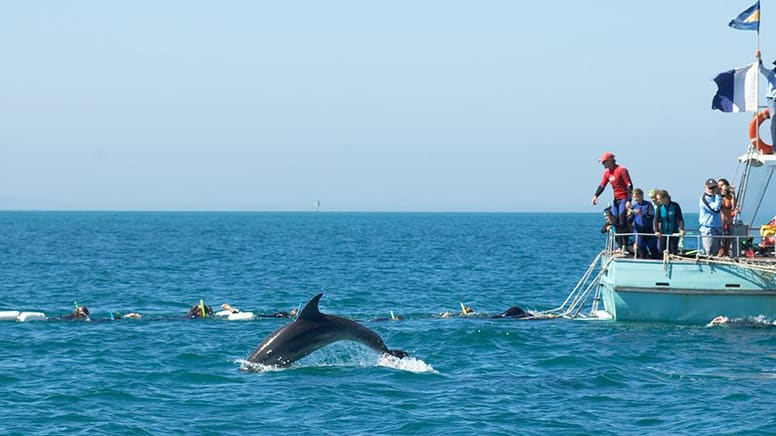 Swim with Wild Dolphins and Seals - Port Phillip Bay, departing Queenscliff