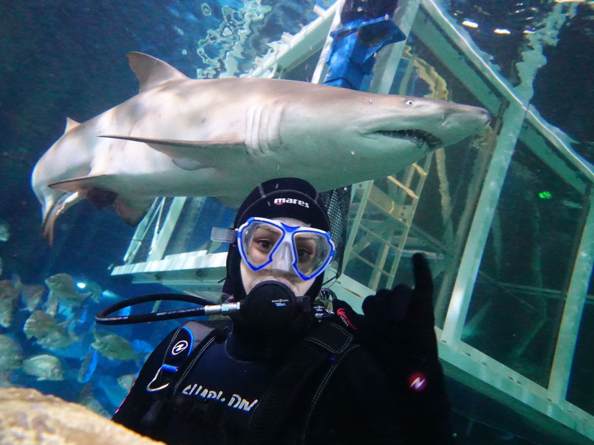 Shark Diving - Sydney Aquarium Darling Harbour