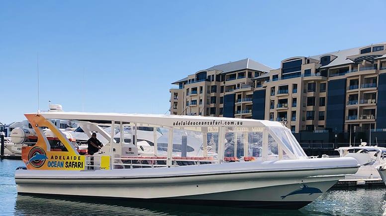 Wild Dolphin Safari Cruise, 75 Minutes - Glenelg, Adelaide