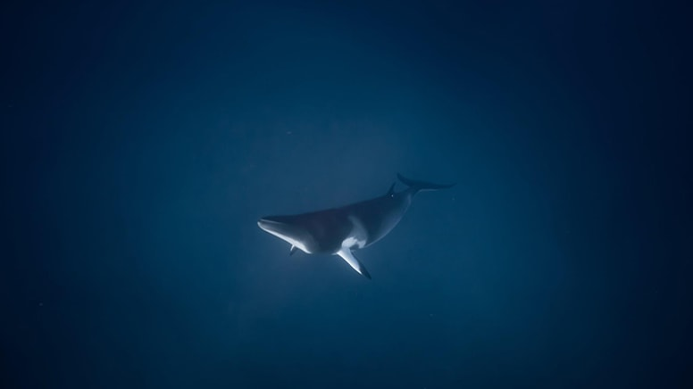 Minke Whale Snorkel Tour, 4 Nights - Great Barrier Reef, Departing Cairns