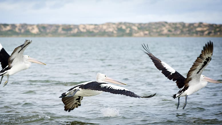 Cruise The Coorong National Park Tour with Lunch