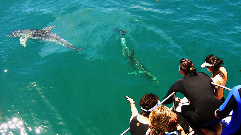 Swim with Dolphins and Seals and Brewhouse Tasting - Port Phillip Bay - For 2