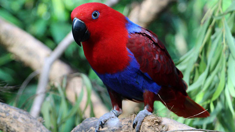 Lunch with the Lorikeets at Wildlife Habitat - Port Douglas