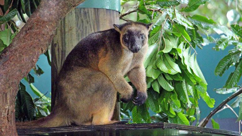 Wildlife Habitat Entry - Port Douglas