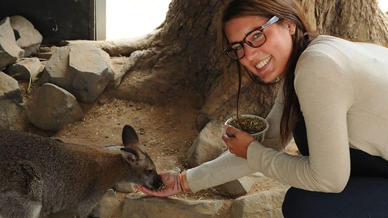 Penguin Parade and Koala Tour - Phillip Island, Departs Melbourne