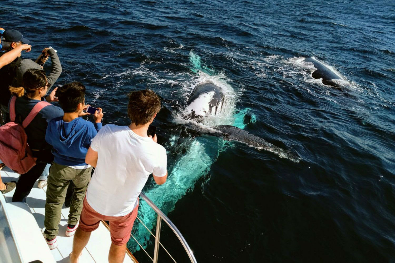 Whale Watching Cruise - Gold Coast, QLD