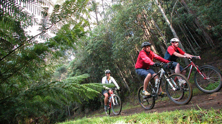 Mount Wellington Descent Cycling Tour, 2.5 Hours - Hobart