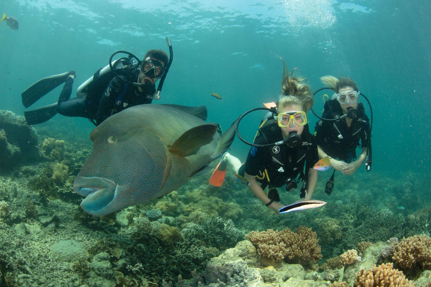 Great Barrier Reef Cruise with Scuba Diving - Cairns - SUMMER SPECIAL