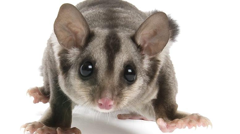Kids Online Meet The Aussie Mammals Experience