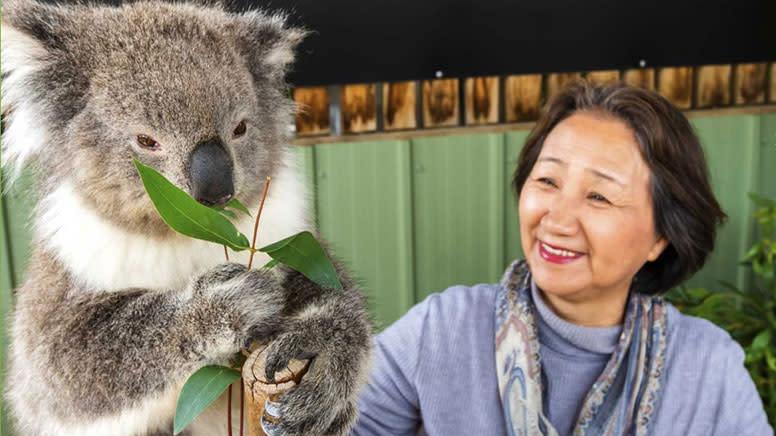 Koala Encounter and Moonlit Sanctuary Admission - Melbourne