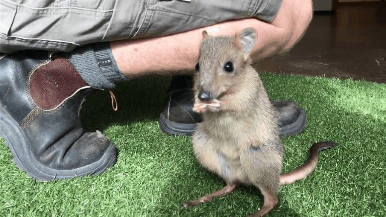 Australian Native Animals Encounter at Monarto Safari Park - Adelaide