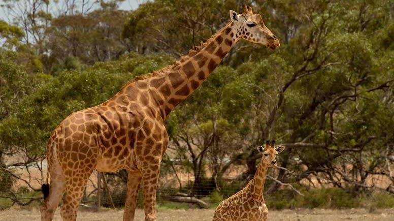 Keeper for a Day at Monarto Safari Park - Adelaide
