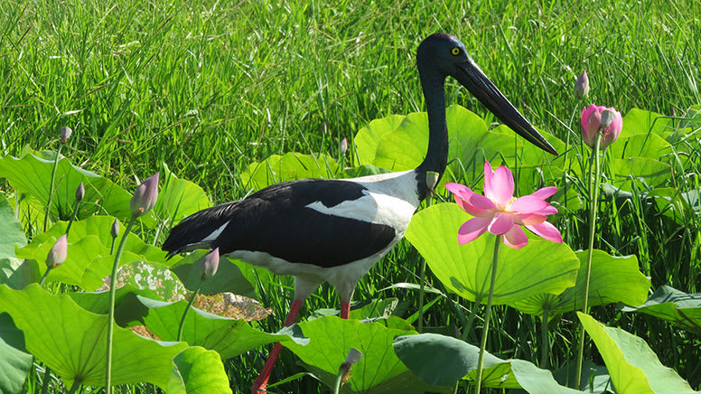 Wetland Wildlife Sunset Cruise, 2 Hours – Darwin
